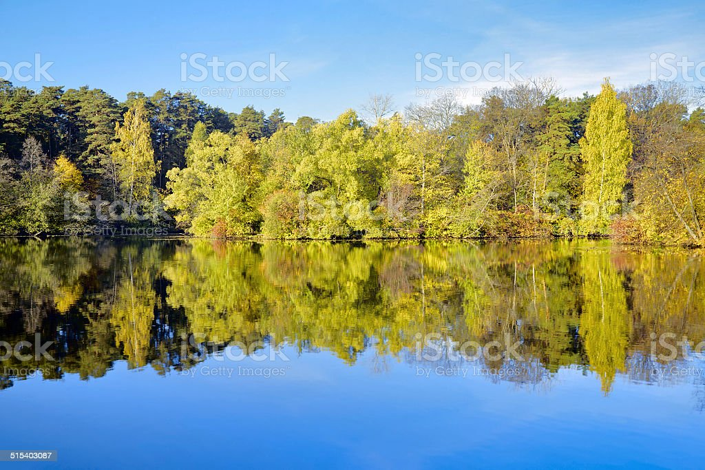 Trees on the shore of lake in autumn stock photo