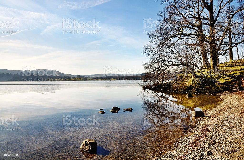 Trees on the shore of Lake Windermere royalty-free stock photo