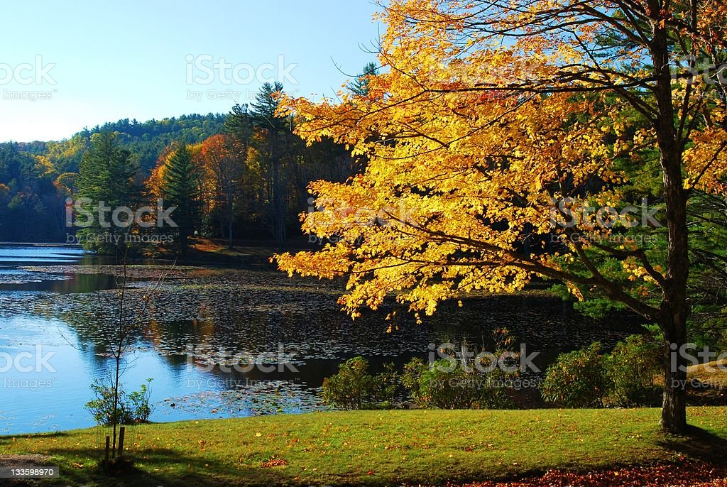Trees on the waterfront and landscaped lawn in autumn royalty-free stock photo