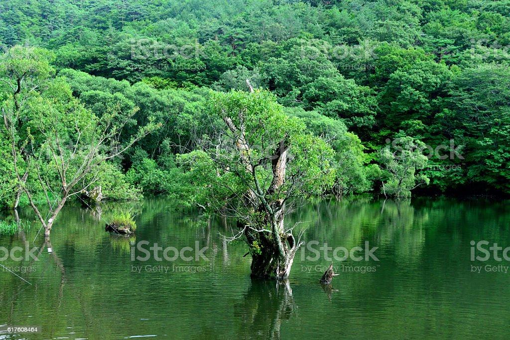 Trees Over Lake stock photo