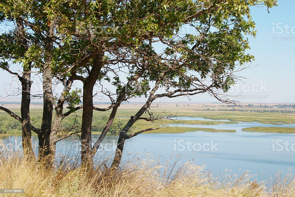 Trees over river royalty-free stock photo