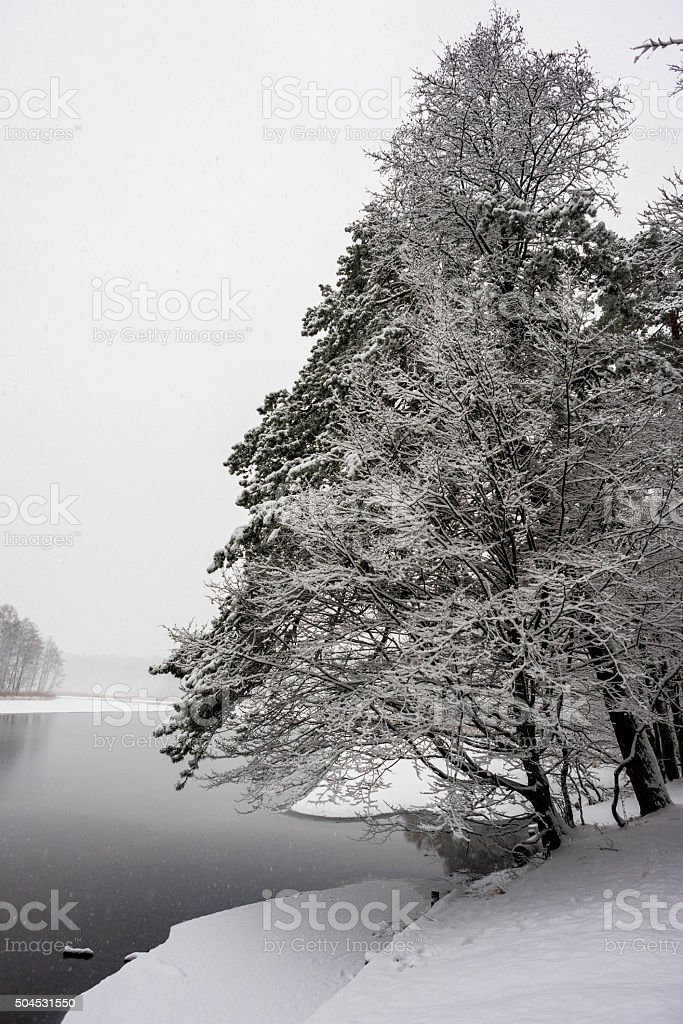trees over river shore during winter stock photo