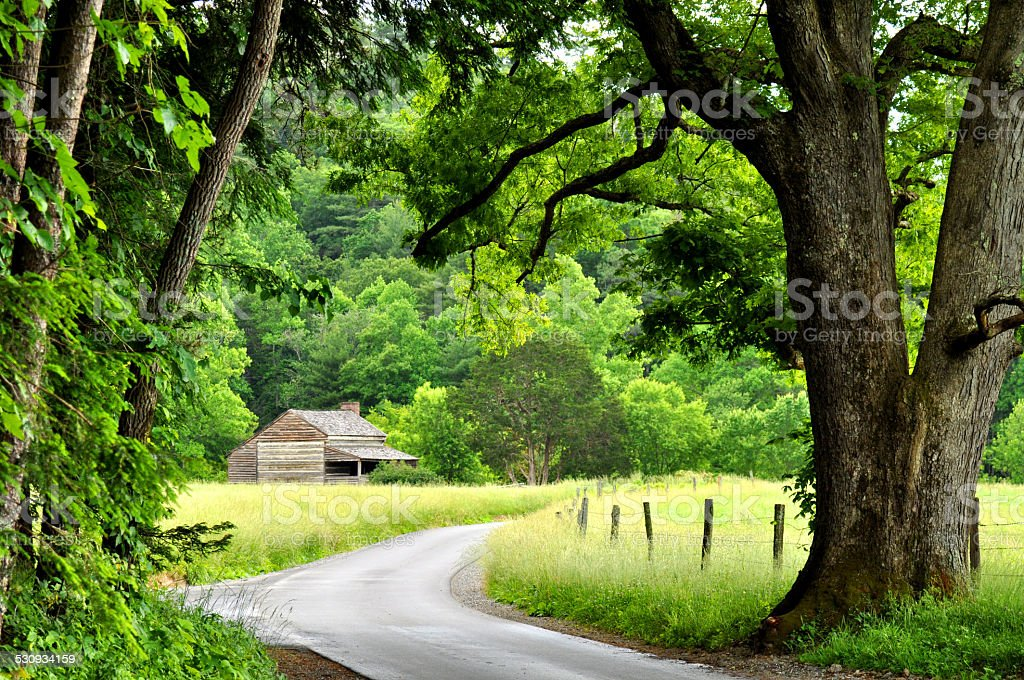 Trees overhanging a winding road in Cades Cove. stock photo