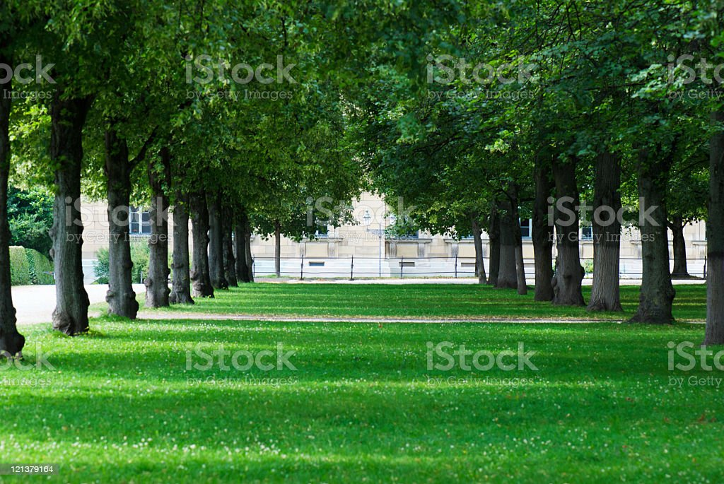 Trees perspective royalty-free stock photo