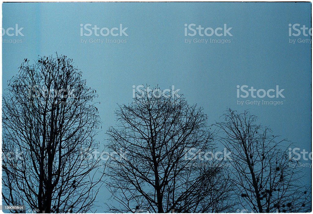 3 trees royalty-free stock photo