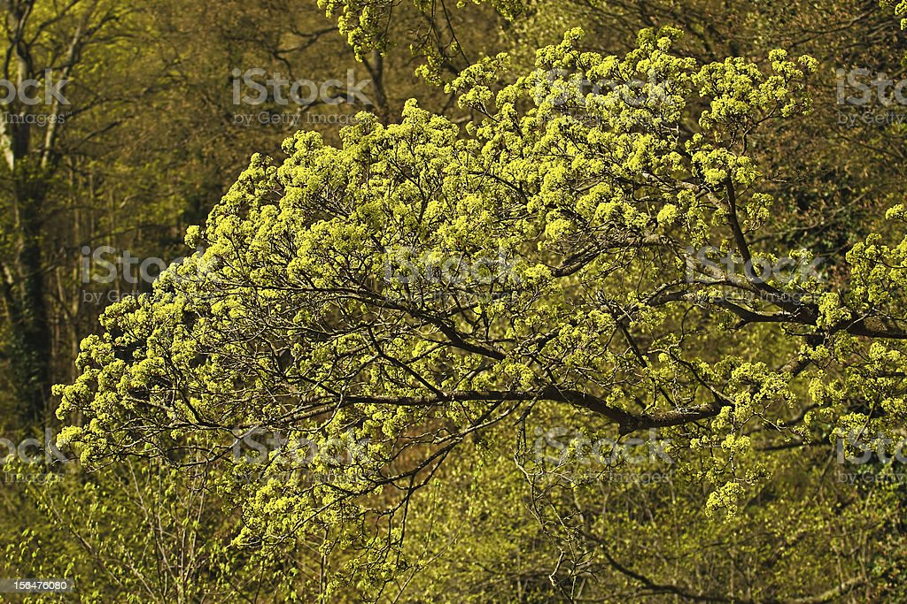 Trees royalty-free stock photo
