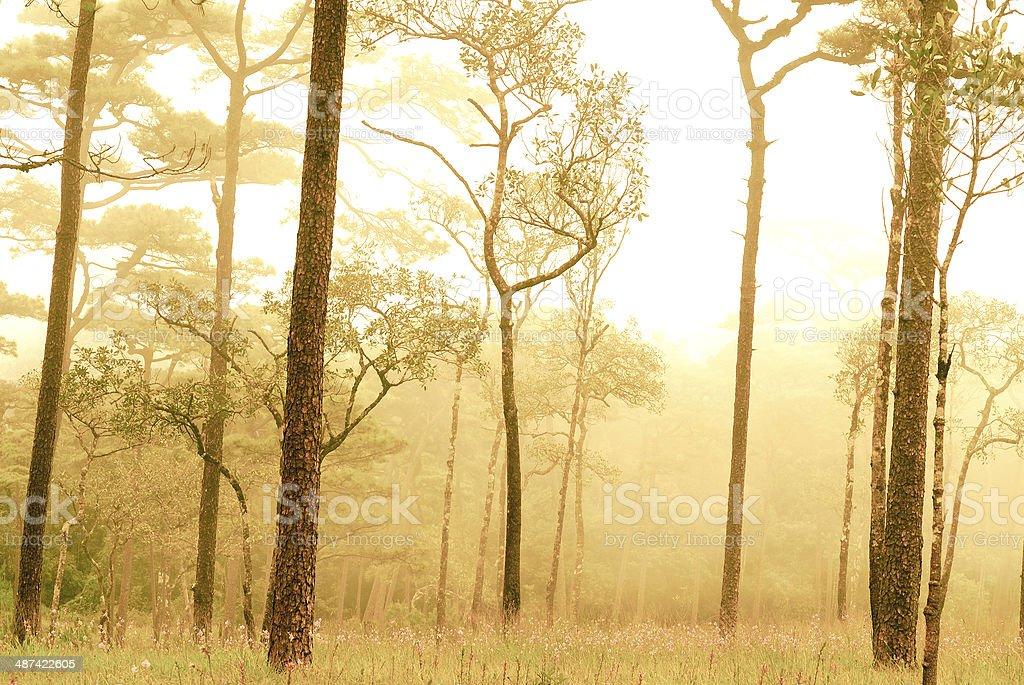 Drzewa zbiór zdjęć royalty-free