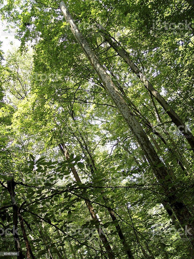Trees. royalty-free stock photo