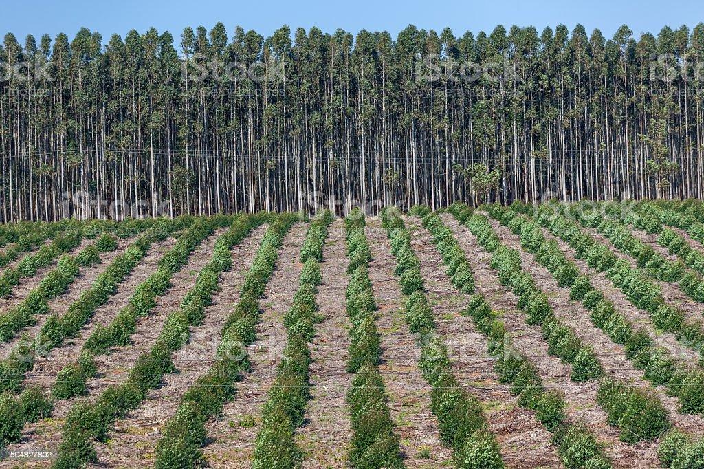 Trees Plantations stock photo