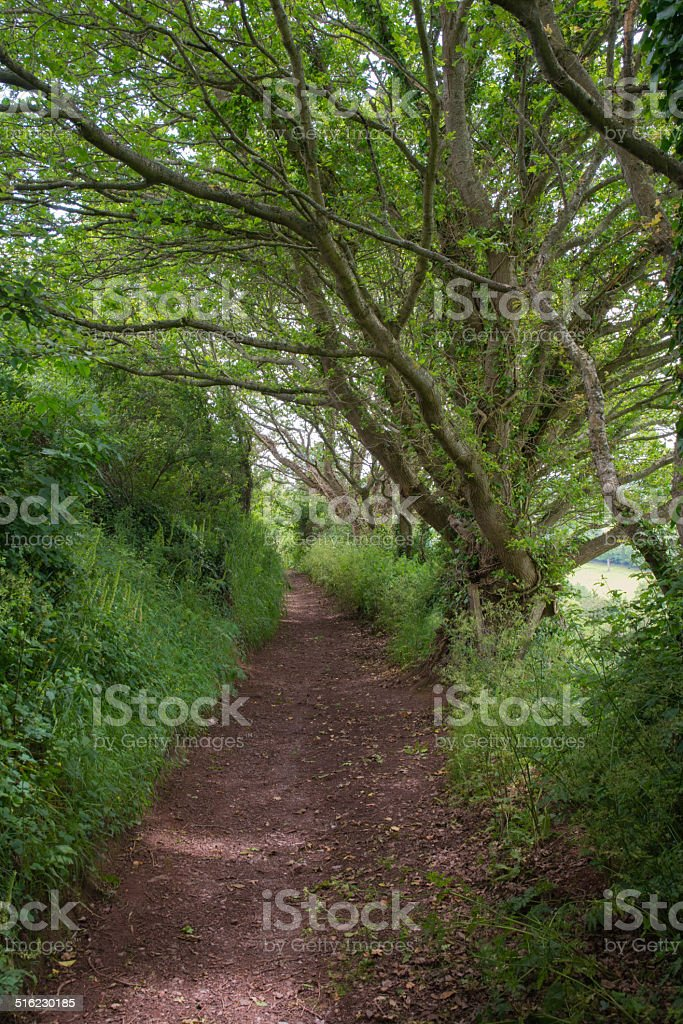 Trees Reaching Over The Path stock photo