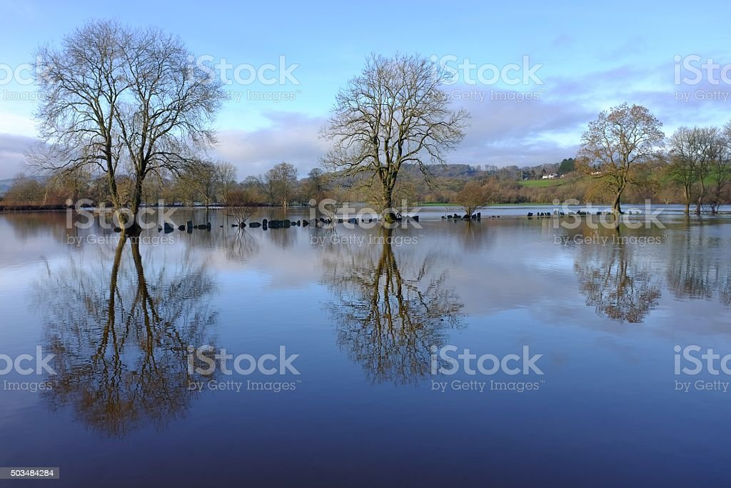 Trees reflected in flood fields stock photo