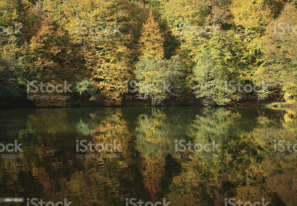 Trees Reflected in Lake royalty-free stock photo