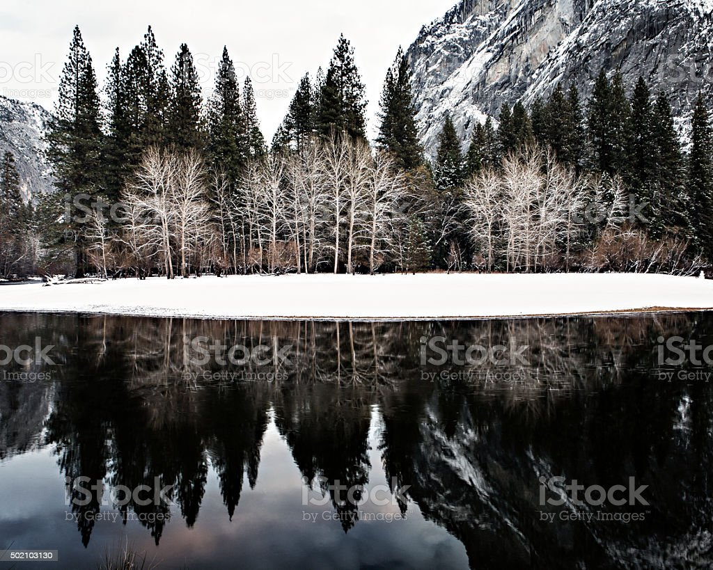 Trees reflected in the Merced river stock photo