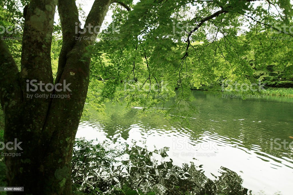 Trees reflected water surface,karuizawa,japan stock photo