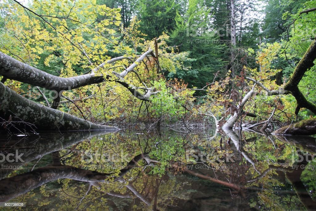 Trees Reflecting in a Pond stock photo