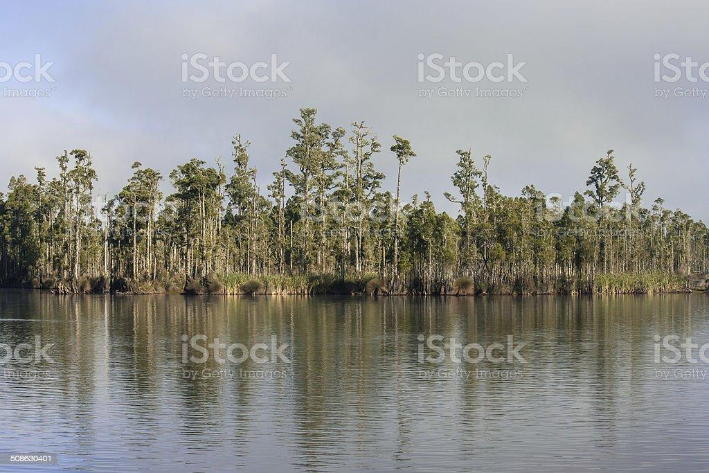 trees reflecting in lake Brunner stock photo