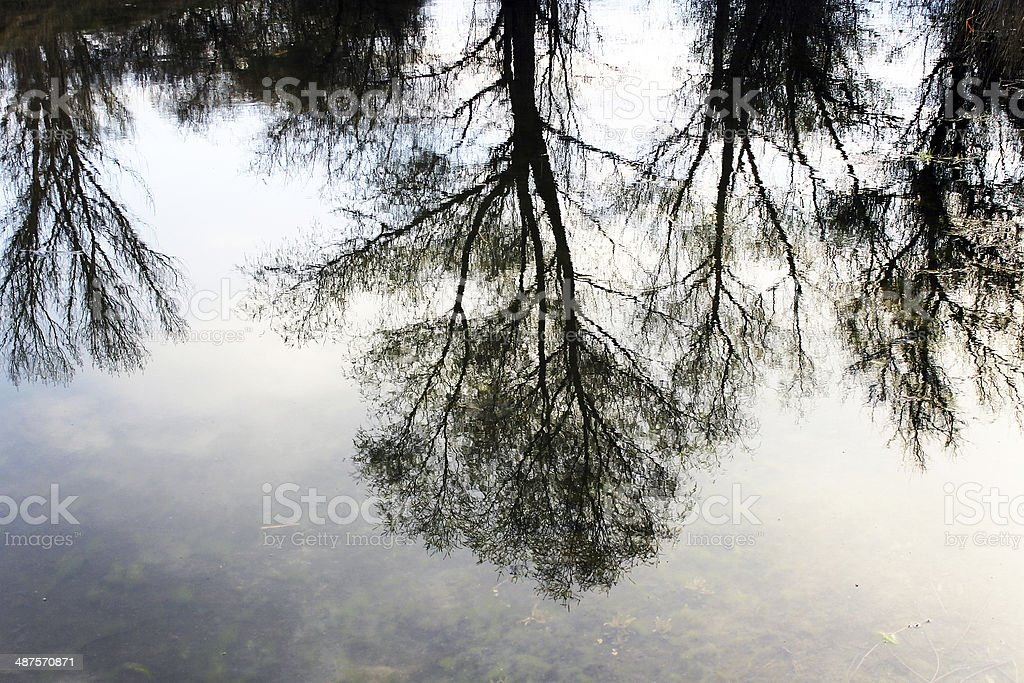 Trees reflecting in the water royalty-free stock photo