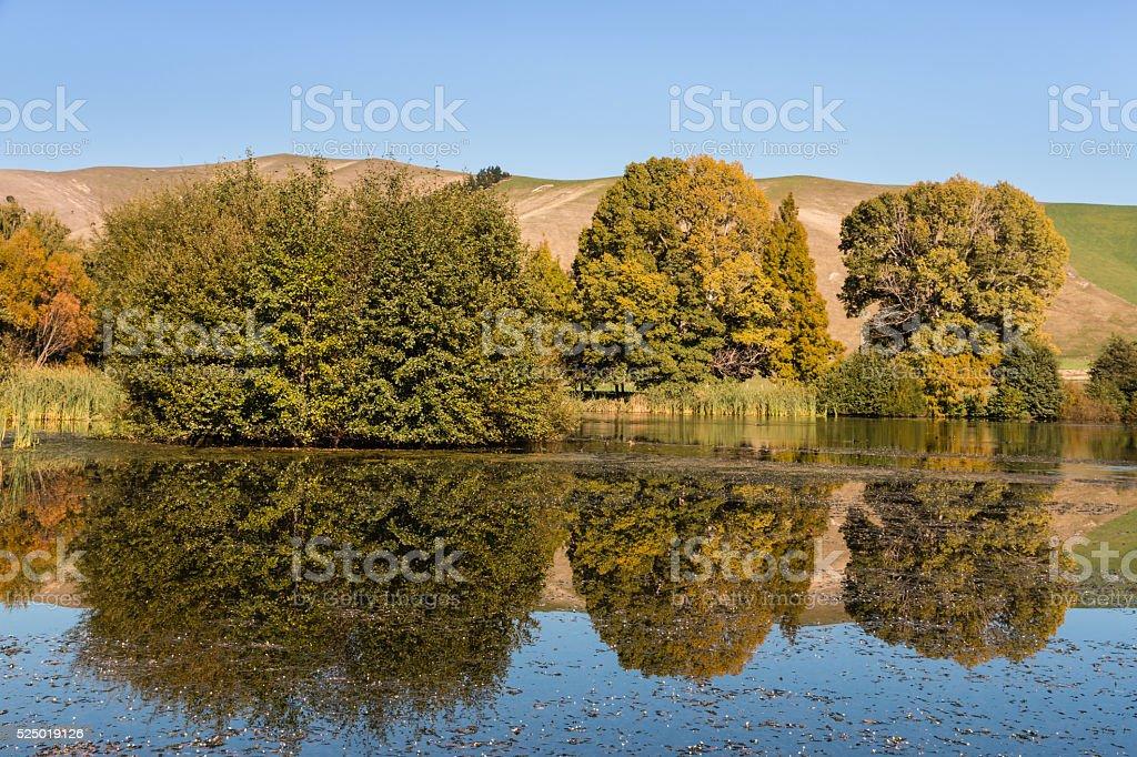 trees reflecting on lake surface stock photo