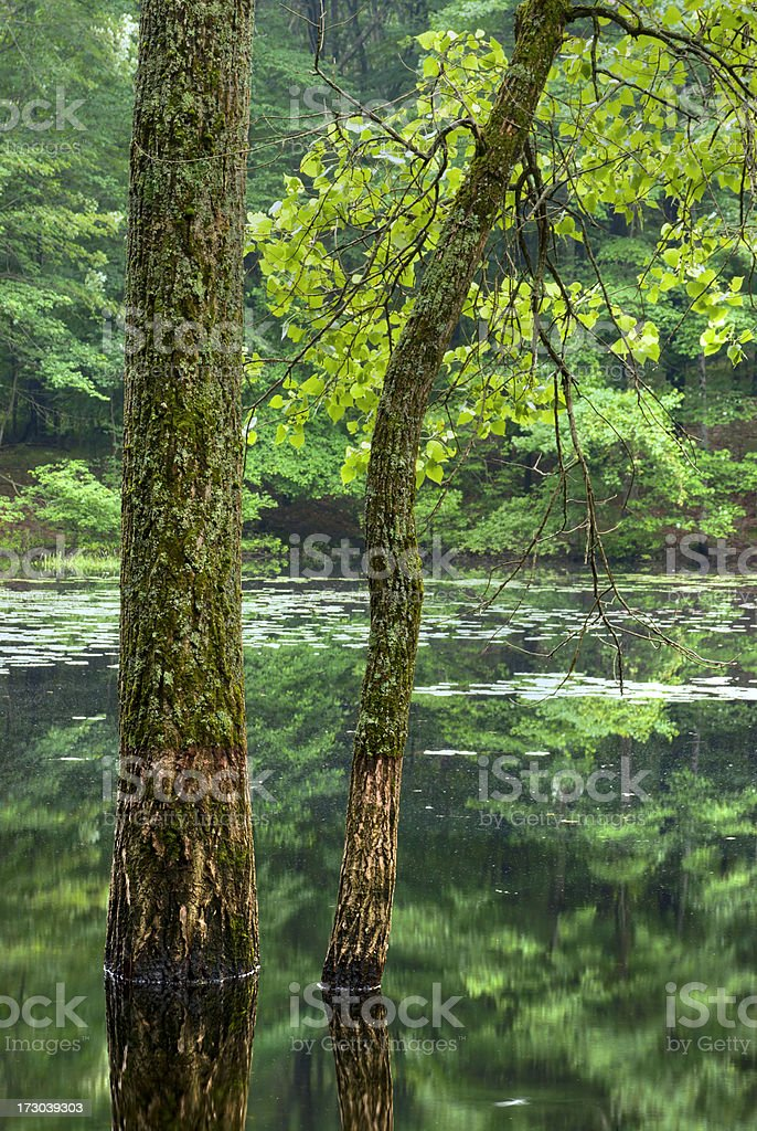 Trees Reflecting stock photo