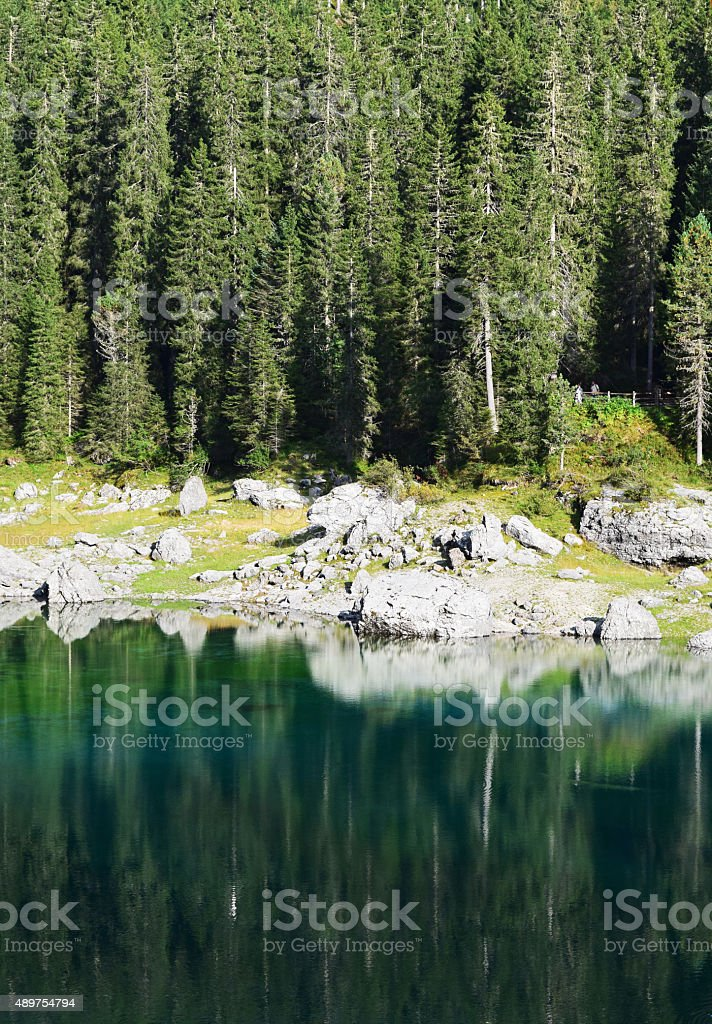 Trees reflection stock photo