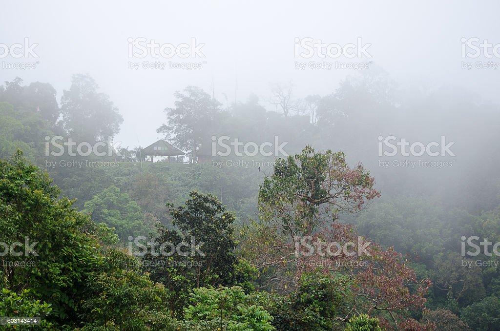Trees scenery on the mountain.blur background stock photo