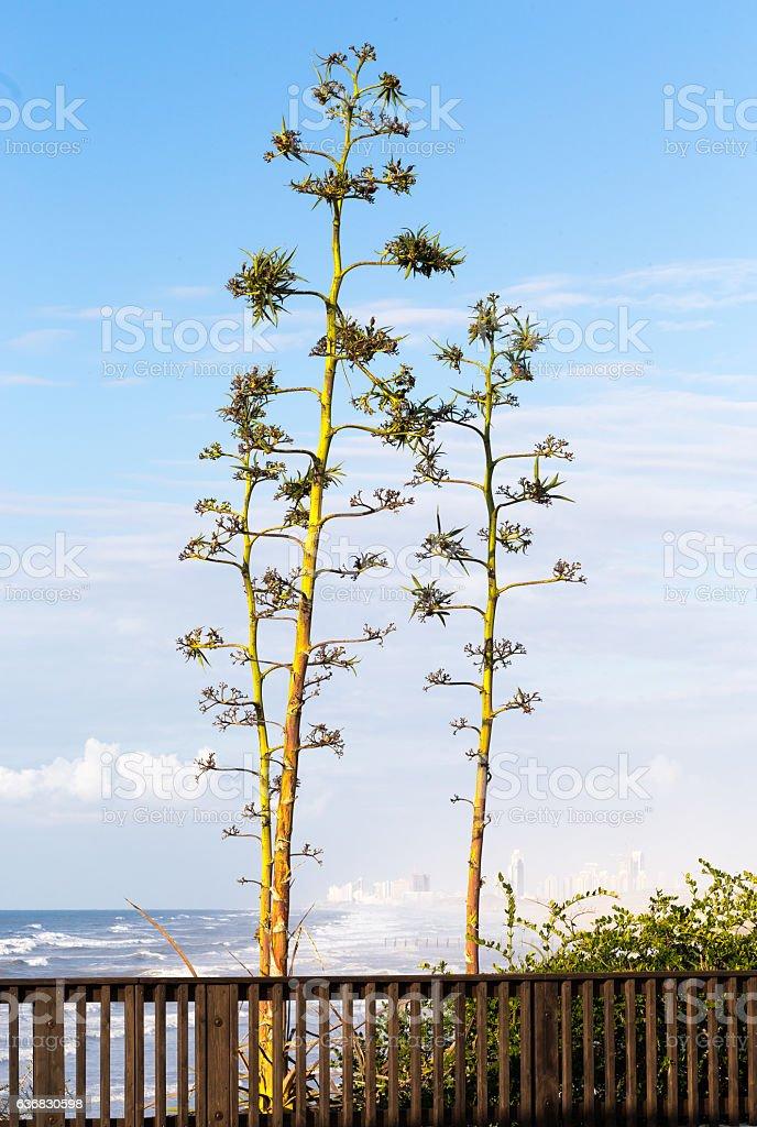 Trees sea sky city background beautiful view shore. stock photo