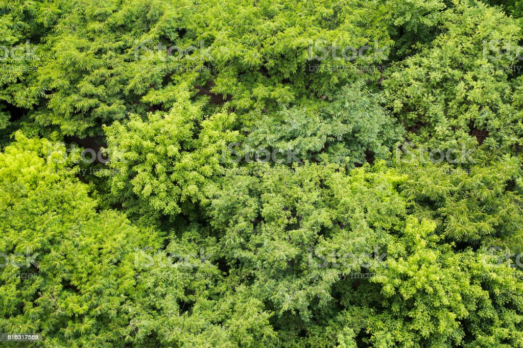 Trees seen from above stock photo