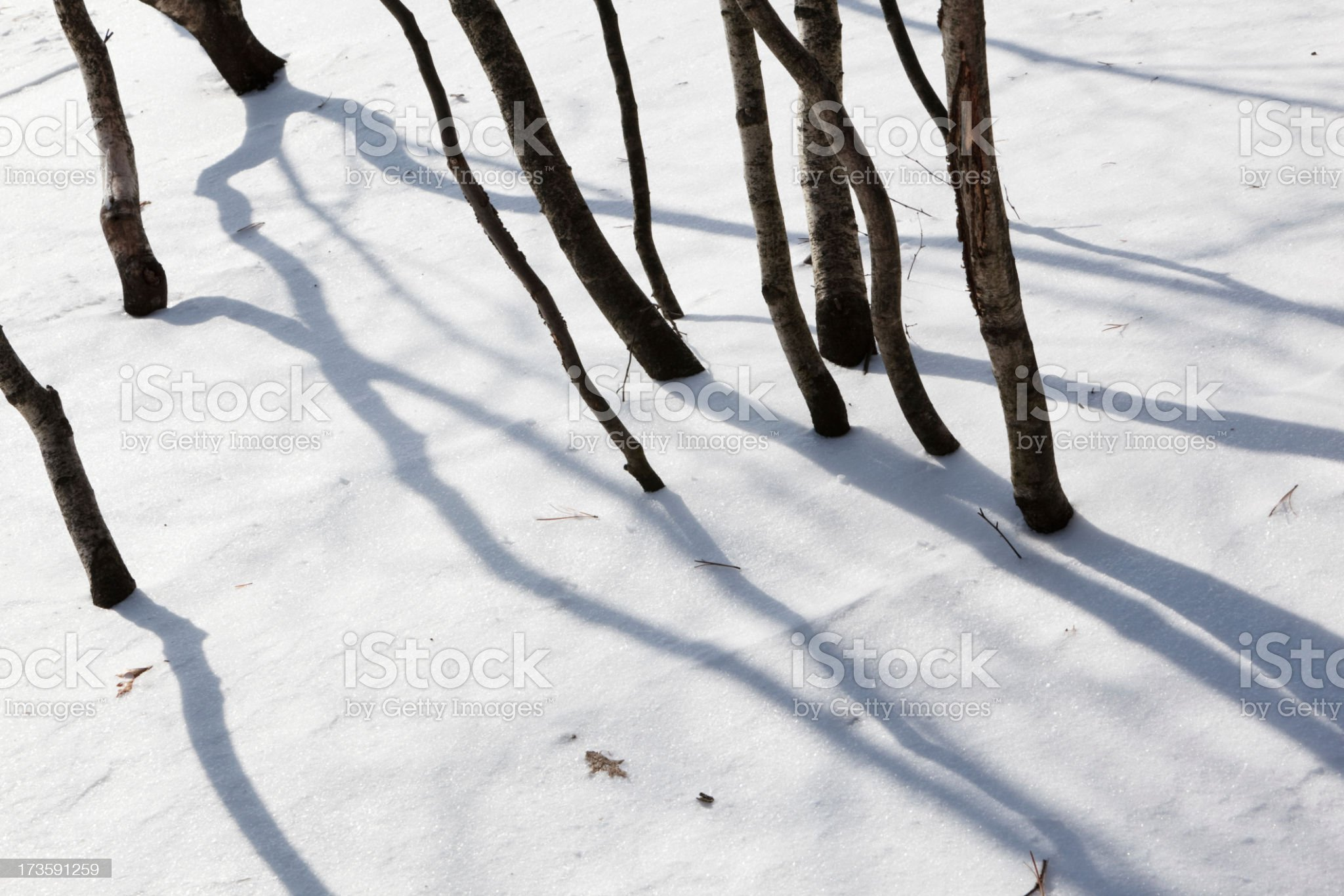 Tree's shadows on the Snow surface royalty-free stock photo