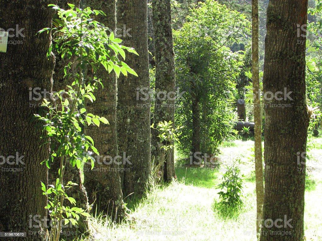 Trees shining royalty-free stock photo