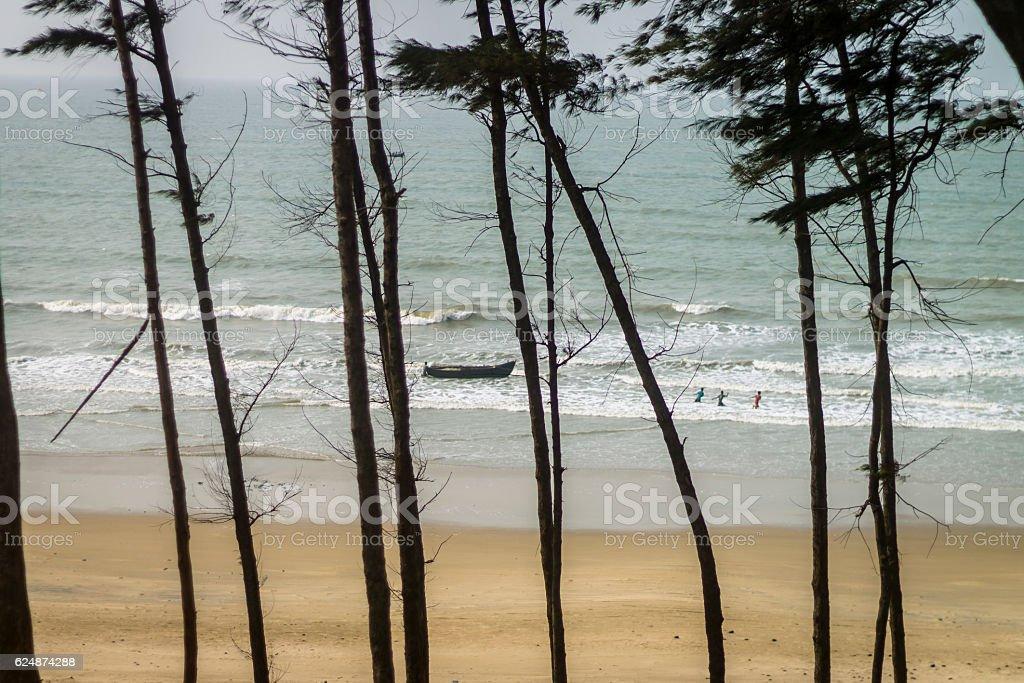 Trees silhouette on Digha beach. stock photo