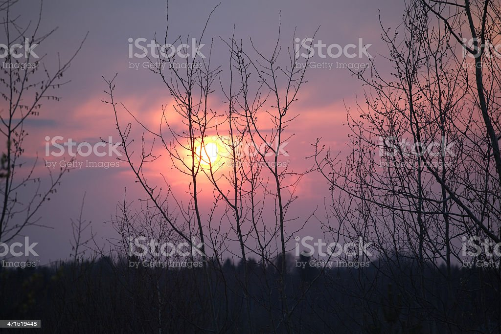 Trees silhouettes against beautiful red sunset stock photo