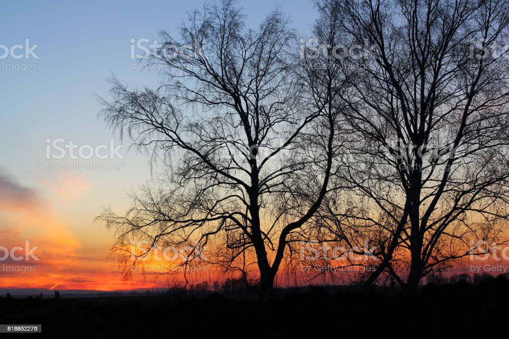Trees silhouettes on sunrise sky background stock photo