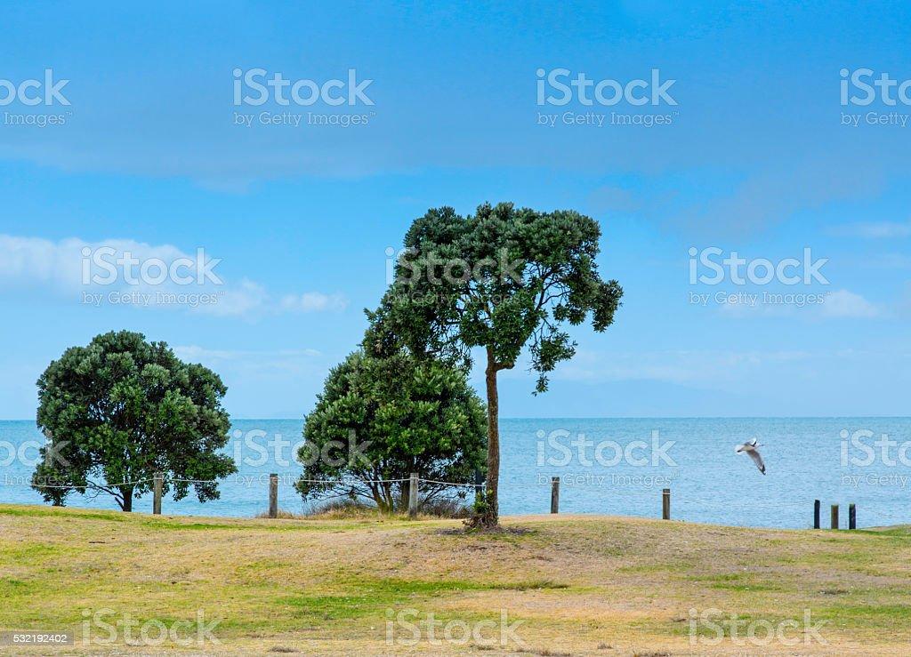 Trees st the beach stock photo