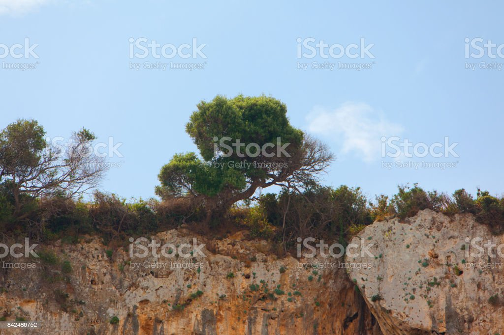 trees standing on the top of a cliff edge. tree growing on rock cliff mountain stock photo