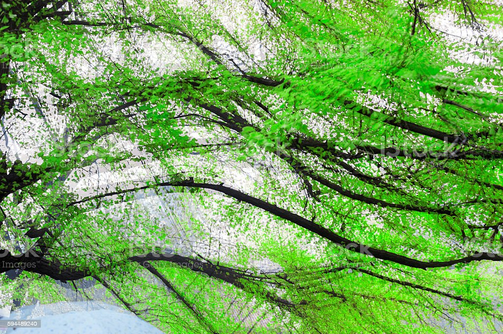 Trees take multiple exposure in spring stock photo