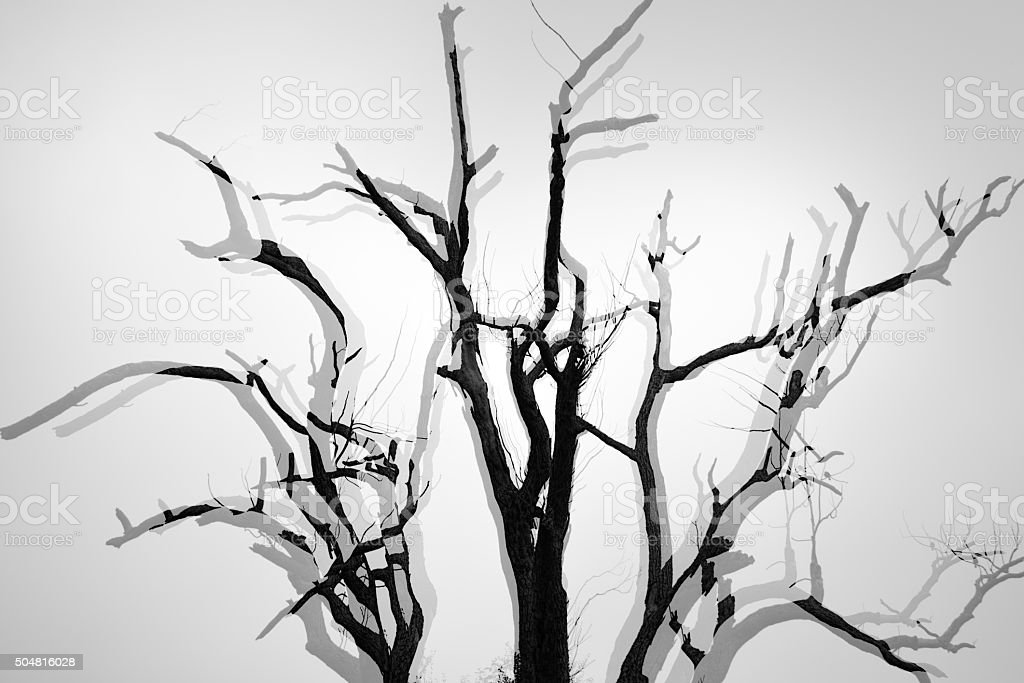 Trees take multiple exposure stock photo