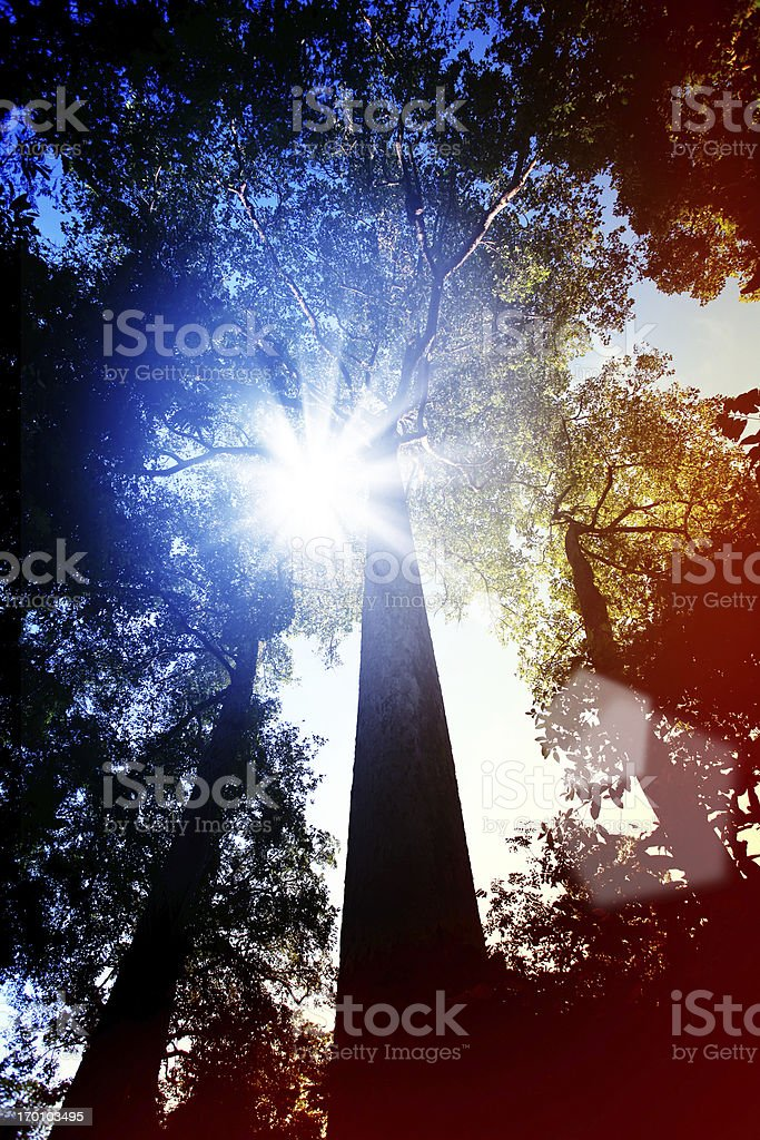 Trees Under the Sun royalty-free stock photo