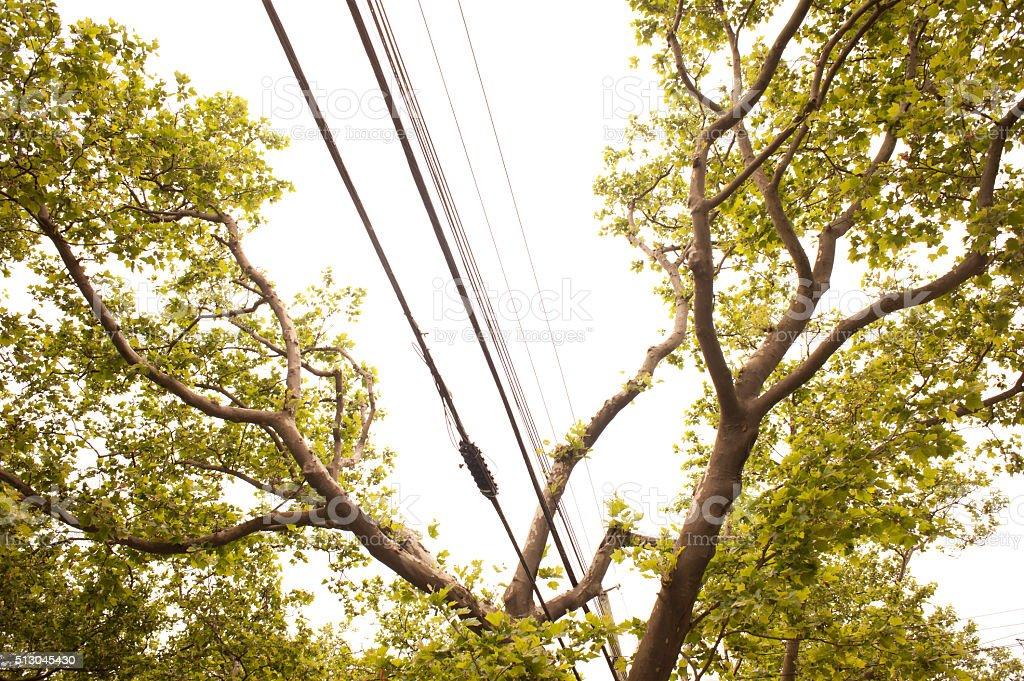Trees & Wires stock photo