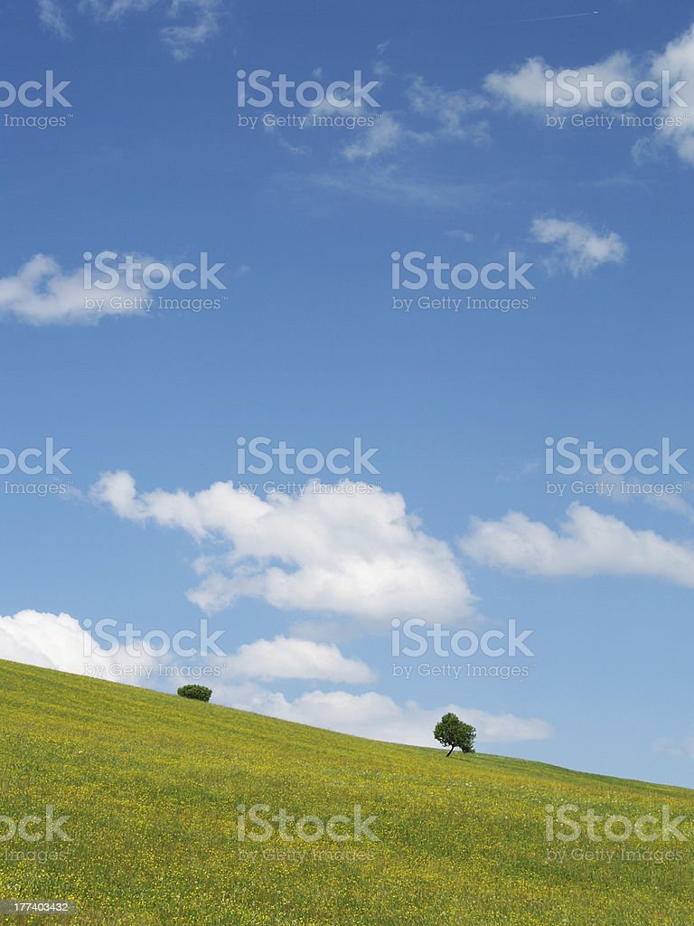 trees with blue sky and clouds 23 stock photo