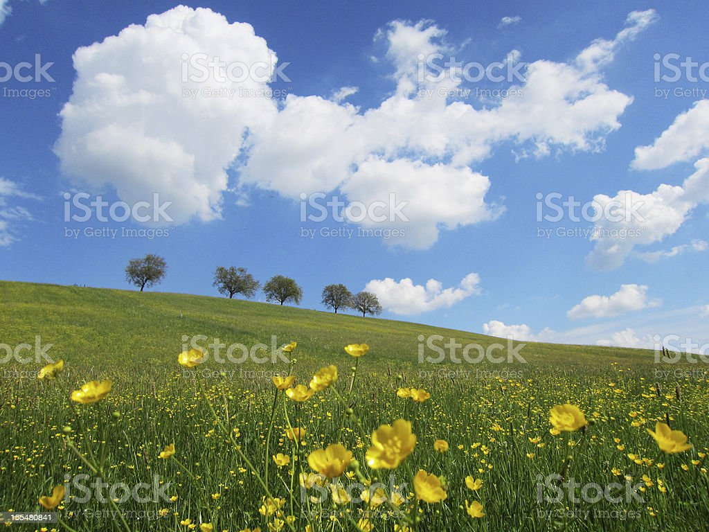 trees with blue sky and clouds stock photo