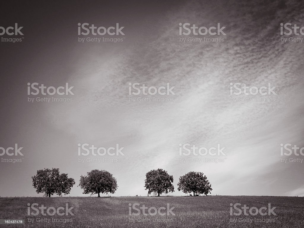 trees with blue sky and clouds, sepia stock photo