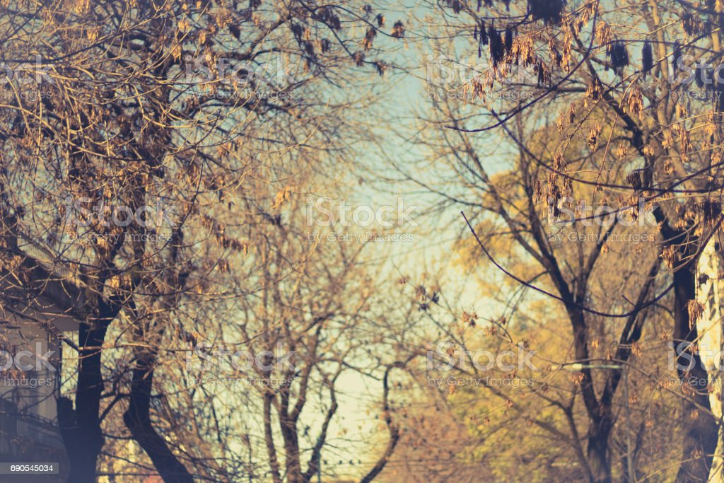 Trees with dry leaves in autumn. stock photo