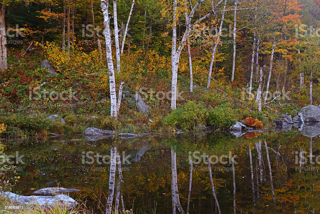 Trees with Fall foliage colors reflecting in Lake stock photo