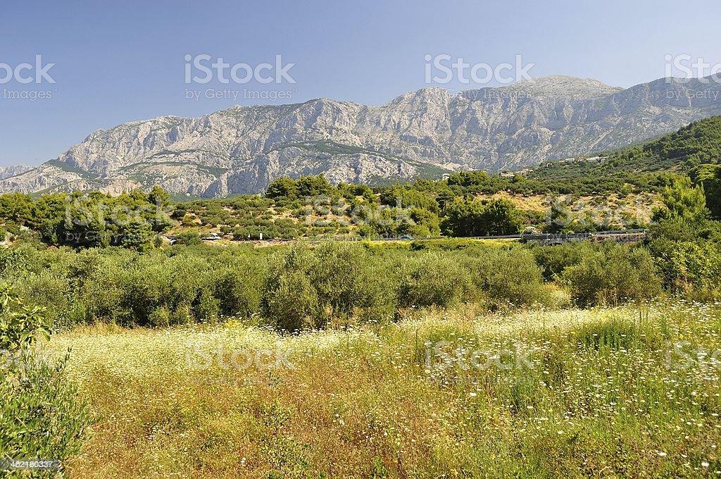 Drzewa z wysokim chorwacki mountain Biokovo w tle zbiór zdjęć royalty-free
