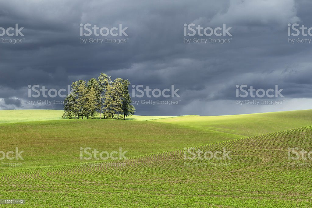 Trees with Storm Clouds royalty-free stock photo