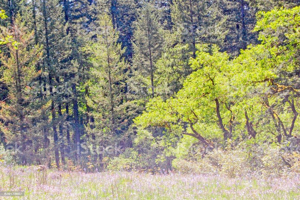 Treescape - Washington stock photo