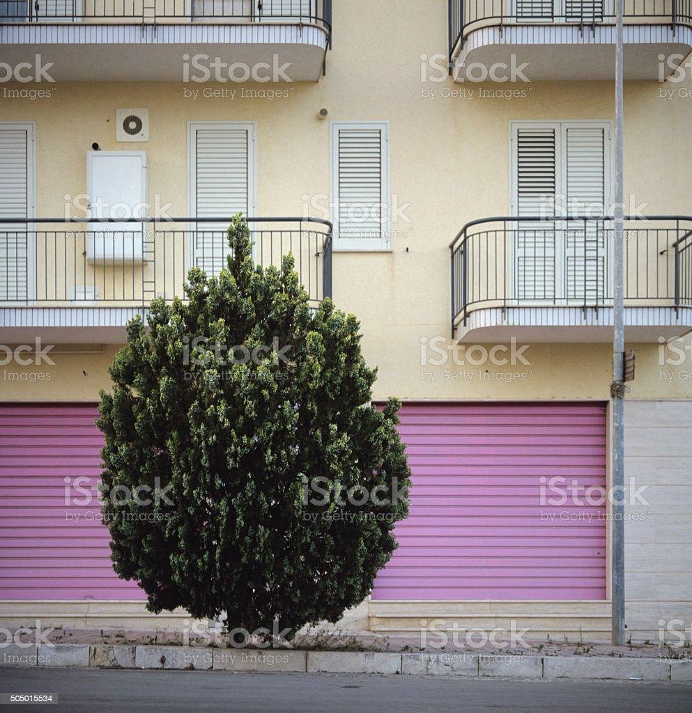 Tree-shaped bush on architectural background stock photo