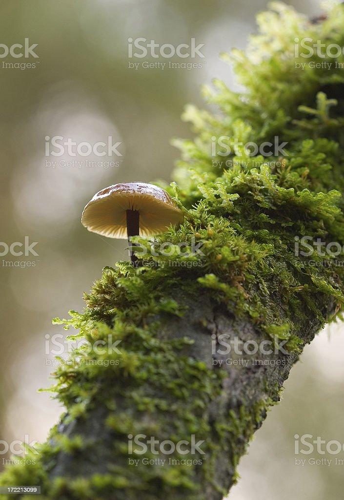 TreeShroom royalty-free stock photo