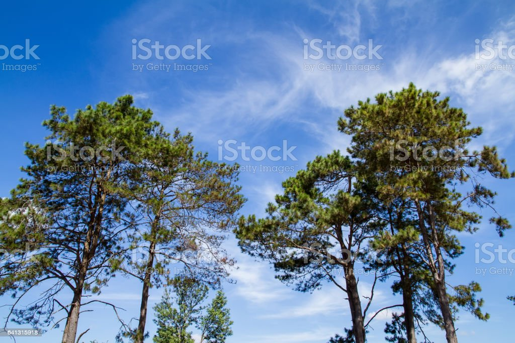 Treetop, canopy, crown of the tree. Forest, food branch and green leaves, foliage. Outdoor nature park landscape background stock photo