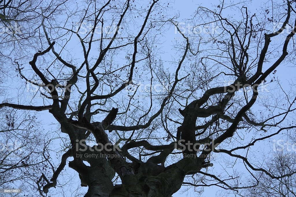 treetop detail and evening sky royalty-free stock photo